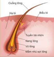 Sự thật về tẩy lông hay triệt lông vĩnh viễn tại tphcm